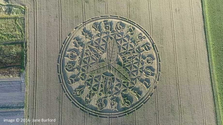 Ansty PYO crop circle